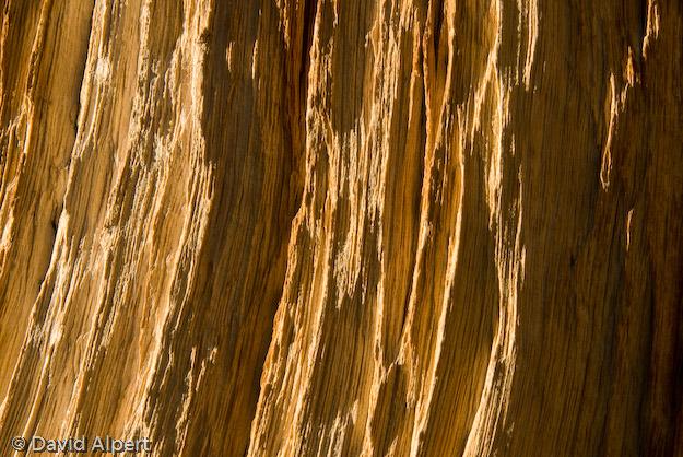 bristlecone-33.jpg